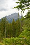 Rocky Mountains. Rockies in Banff, Alberta (Sulpher Mountian Royalty Free Stock Images