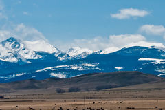 Rocky mountains. Near yellowstone national park during spring royalty free stock images