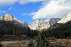 Rocky Mountains - Canada. Rocky mountains and forest, Canada royalty free stock photography