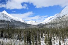 Rocky Mountains - Canada. Rocky mountains and forest, Canada royalty free stock photos