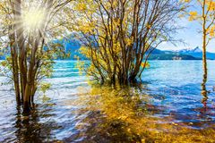 Rocky Mountains of Canada. Autumn sun warms the mountain valley. The golden foliage of aspen and birches. Rocky Mountains of Canada, autumn flood of artificial royalty free stock images