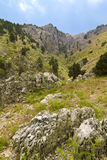 Rocky mountains and cedars. In Lebanon Stock Images