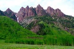 Rocky Mountains Covered mit hellgrünem Aspen Trees Lizenzfreie Stockfotos