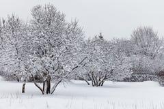 Rocky Mountains Covered vid snö Dolda träd för snö i parkera royaltyfri fotografi