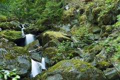 Rocky Mountains Creek Royalty Free Stock Photography