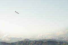 Rocky Mountains en het vliegende Landschap van de adelaarsvogel royalty-vrije stock foto's