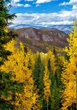 Rocky Mountains in the fall. With aspen Royalty Free Stock Photo