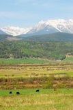Rocky mountains and farms Royalty Free Stock Images