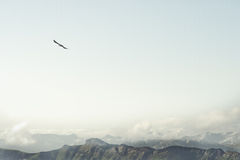 Rocky Mountains and flying eagle bird Landscape Royalty Free Stock Photos
