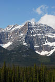Rocky mountains and forest royalty free stock image