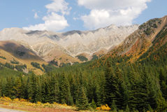 Rocky mountains and forests. Autumn view of rocky mountains and forests in kananaskis country, alberta, canada Royalty Free Stock Photography
