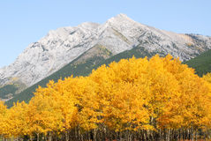 Rocky mountains and forests Stock Images