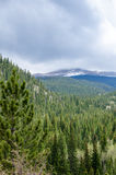 Rocky Mountains. Forrest scene with the Colorado mountains in the background royalty free stock photography