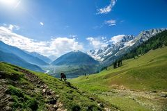 Rocky Mountains and green Field Stock Image