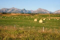 Rocky Mountains Hay Bales in Alberta royalty-vrije stock fotografie
