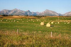 Rocky Mountains Hay Bales i Alberta royaltyfri fotografi
