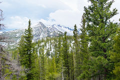 Rocky mountains in the springtime Royalty Free Stock Photography
