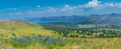 Rocky Mountains Summer Wildflowers. Rocky mountains in summer, showcasing green hills and beautiful wildflowers with rocky peaks in the background stock photography