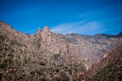 Saguaro cacti dot the landscape in Sabino canyon in Tucson, Arizona. The rocky mountains that surround Sabino canyon in Tucson, Arizona Stock Photography