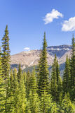 Rocky Mountains wood Royalty Free Stock Photography