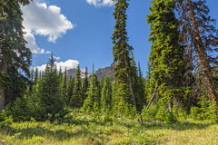 In the Rocky Mountains wood Stock Photography