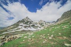 Rocky Mountains y campo verde foto de archivo