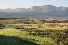 Rocky Mountains y colinas en Alberta fotografía de archivo libre de regalías