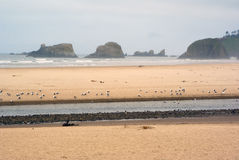 Rocky north Oregon shore in early morning. With seagulls Royalty Free Stock Photography
