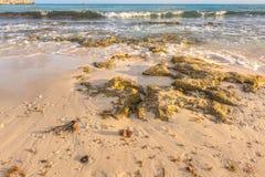 Rocky Ocean Beach. Breaking waves of ocean hitting rocks on beach front royalty free stock photo