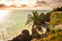 Rocky ocean coastline with beach and palm trees, Mexico Royalty Free Stock Photo