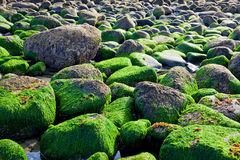 Rocky ocean shore Royalty Free Stock Photos
