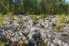 Rocky outcrops of the Salair ridge have gold of the river Suenga Royalty Free Stock Images