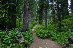 Rocky path. In mountain park Stock Image