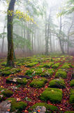 Rocky path in foggy forest Stock Images
