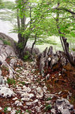 Rocky path through the forest Stock Image