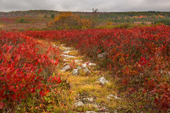 Rocky pathway through red leaves Dolly Sods Stock Photography