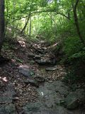 Rocky pathway in the woods Royalty Free Stock Photography