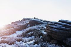Rocky peak of Alps mountain in sunny winter day. Frozen bilberry and rock under fresh hoarfrost. Rocky peak of Alps mountain in sunny winter day. Frozen Stock Photos