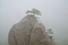 Rocky peak in the fog, a small tree on top Royalty Free Stock Images