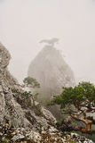 Rocky peak in the fog, a small tree on top Royalty Free Stock Image