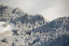Rocky peak covered with frozen trees, Alps Stock Photo