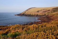 Rocky Pembrokeshire Coastline above yellow Gorse Stock Photography