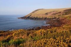 Rocky Pembrokeshire Coastline above yellow Gorse Stock Photography