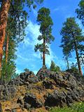 Rocky Pine. Ponderosa forest scene among the rocks - west of Sisters, OR stock photo