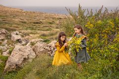 On a rocky plateau, there are two vintage girls sisters friends are considering mimosa flowers near the rocky sea shore at stormy Royalty Free Stock Photos