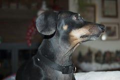 Rocky Profile Foto de Stock
