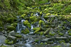 Rocky Rainforest Creek Stock Image
