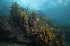 Rocky reef with some kelp Stock Photo