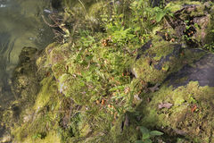 Rocky river bank covered with moss, grass and mushrooms Royalty Free Stock Photography