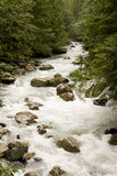 Rocky River Past Evergreens Royalty Free Stock Image